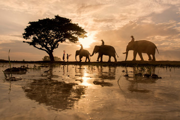 The shadow of a tree , elephant rice fields .