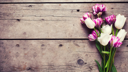 Bright  violet and white tulips flowers on aged wooden  backgrou
