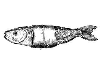 Vector illustration of a perch. Drawn in ink hand drawing. Engraved style illustration