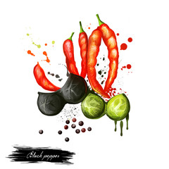 Black and red pepper hand draw. Digital art