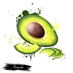 Avocado painting. Persea americana. Digital art