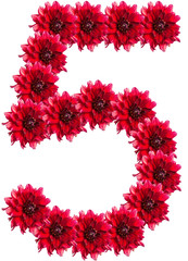 numbers of red dahlia flower. isolated on white background