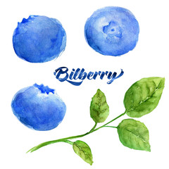 Bilberry berries with a branch. Water color illustration