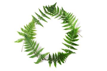 frame of fern
