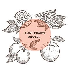 hand drawn orange fruits