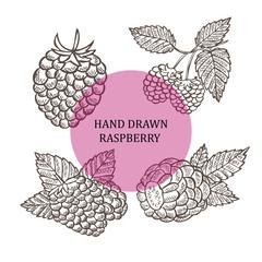 hand drawn raspberry fruits