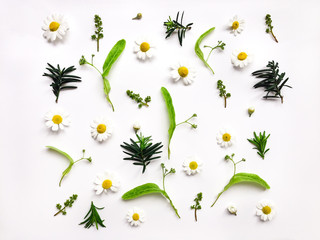 Colorful bright pattern of meadow herbs and flowers on white background. Flat lay photo