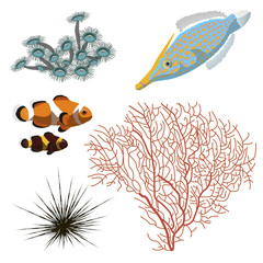 Marine life. The corals, sea urchins and fish. You can use all together or each separately as your wish.