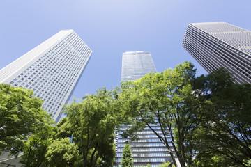 新宿高層ビル街 快晴 青空 新緑 緑 春 見上げる