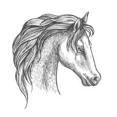 Arabian horse head sketch for equestrian design