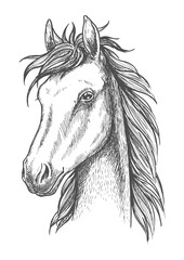 Sketched horse head icon for t-shirt print design