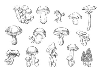 Edible and poisonous wild mushrooms, sketch style