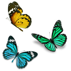 Three colorful butterfly