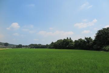田んぼの風景14