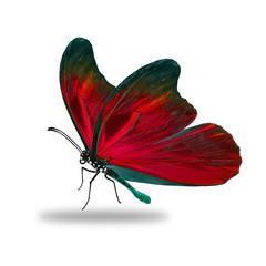 Beautiful red butterfly