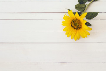 Background with sunflower on a white painted wooden boards. Spac