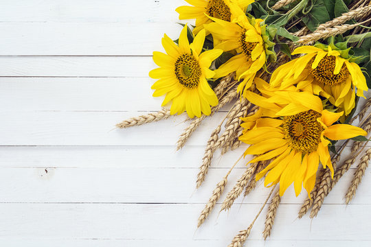 Background with a bouquet of sunflowers and wheat ears on a whit
