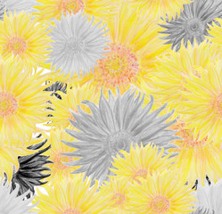 Pencil colored Sun flower Seamless pattern in yellow and Black and white style