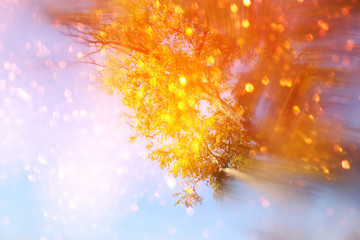 blurred abstract photo of light among trees and glitter bokeh
