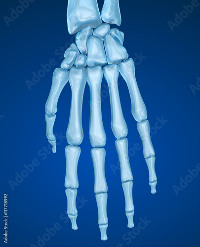 Skeletal hand , Medically accurate 3D illustration
