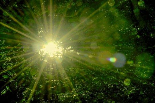 Sonne strahlt explosiv durch Wald und Blätter