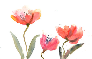 Red Tulips on white, watercolor painting