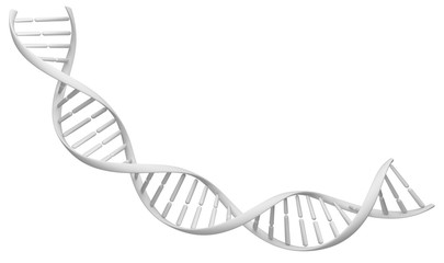 White spiral DNA stran