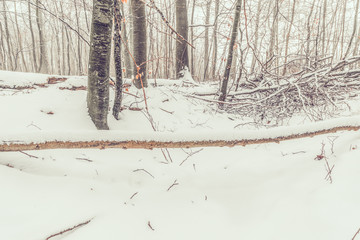 Snow on a large branch