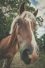 Horse with trendy haircut