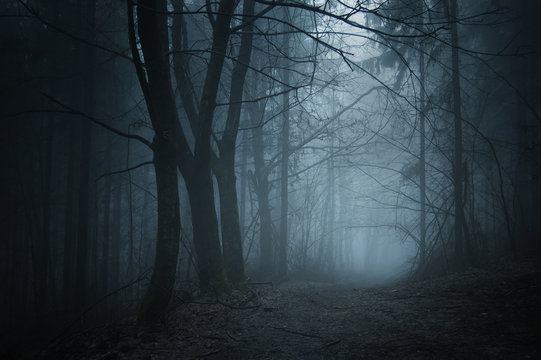 spooky woods at night
