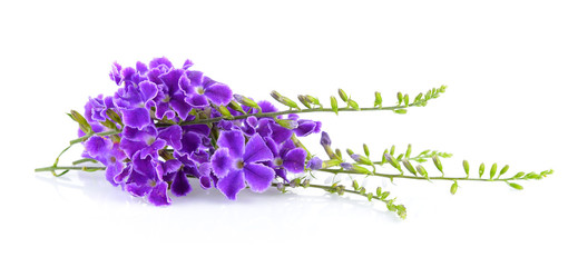Violet photos royalty free images graphics vectors videos purple flowers on white background mightylinksfo
