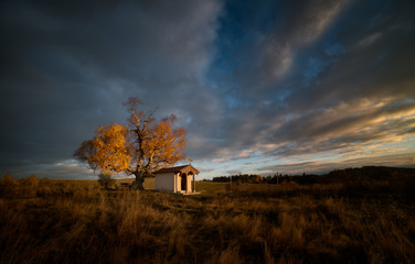 Small hut and autumn tree on grassy landscape