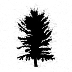 Fir tree on white textured background illustration. Black coniferous tree silhouette. Hand drawing.