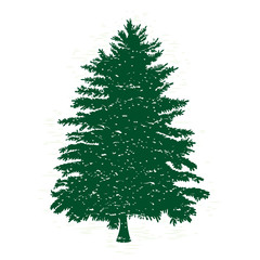 Hand drawn textured fir tree vector illustration. Silhouette of the grunge pine tree.