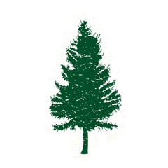 Vector evergreen silhouette of pine and fir tree, conifer tree, nature design element.