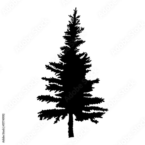 Pine Tree Isolated On White Background Silhouette Woods And Fir