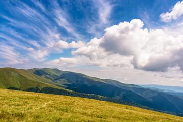 hill side meadow in summer