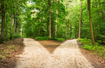 Foto op Aluminium Weg in bos Choose the way