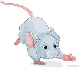Wonderland Mouse