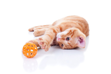 Happy Kitten Cat Playing With Toy Ball and Scratching