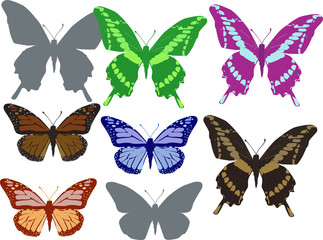 eight color butterflies isolated on white