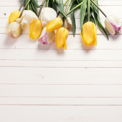 Bright yellow and white spring tulips on white  wooden backgroun