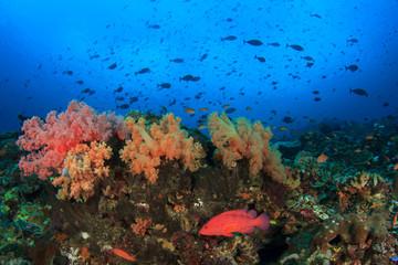 Coral reef underwater sea ocean