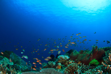 Coral reef underwater sea ocean