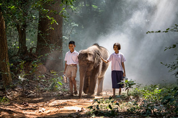 Thailand students are walking with their elephants. In the forest with mist.