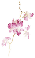 Isolated watercolor orchid branch on white background