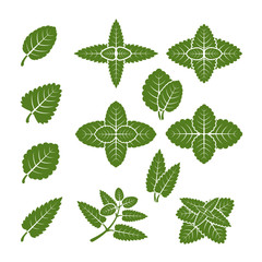 Wall Mural - Mint leaves vector set