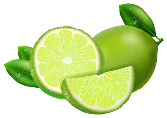 Lime, slices and whole. Vector illustration.