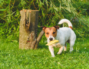 Dog fetching toy yellow saw playing woodcutter role