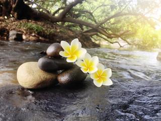 Acrylic Prints Flower plumeria or frangipani with pebble on big stone at waterfall